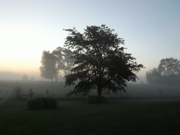 Tree fog in Richland Township.<br /> <br /> Photographer's Name: J.R. Rosencrans<br /> Photographer's City and State: Aleandria, Ind.