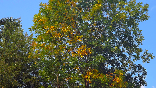 The start of fall in Richland Township.<br /> <br /> Photographer's Name: J.R. Rosencrans<br /> Photographer's City and State: Alexandria, Ind.