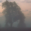 Morning fog in Richland Township.<br /> <br /> Photographer's Name: J.R. Rosencrans<br /> Photographer's City and State: Alexandria, Ind.