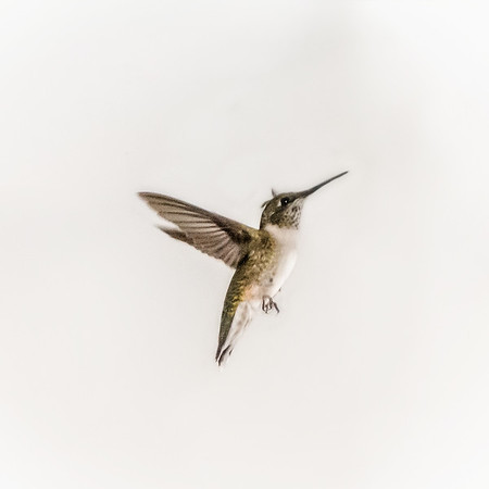 This hummingbird was stuck in our garage.<br /> <br /> Photographer's Name: Terry Lynn Ayers<br /> Photographer's City and State: Anderson, Ind.