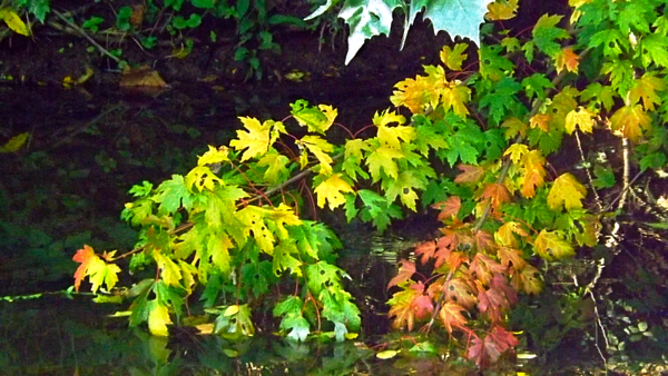 Killbuck Creek in the early stage of fall.<br /> <br /> Photographer's Name: J.R. Rosencrans<br /> Photographer's City and State: Alexandria, Ind.