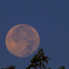 Super moon, taken in Richland Township.<br /> <br /> Photographer's Name: J.R. Rosencrans<br /> Photographer's City and State: Alexandria, Ind.