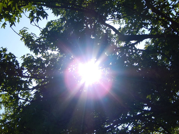 Sun burst through the trees in my yard.<br /> <br /> Photographer's Name: Jenee Wilber<br /> Photographer's City and State: Anderson, Ind.
