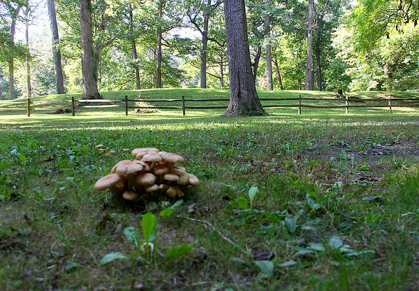 The Great Mound at the park with a fungus nearby.<br /> <br /> Photographer's Name: Jerry Byard<br /> Photographer's City and State: Anderson, Ind.