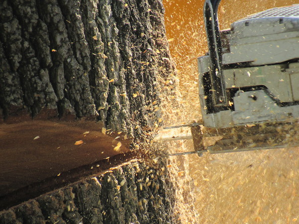 Flying sawdust, from a saw cutting through a tree trunk.<br /> <br /> Photographer's Name: Harry Van Noy<br /> Photographer's City and State: Lafayette Township, Ind.