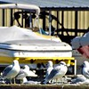 """Birds of feathers and yellow boats"" at Morse Reservoir.<br /> <br /> Photographer's Name: J.R. Rosencrans<br /> Photographer's City and State: Alexandria, Ind."