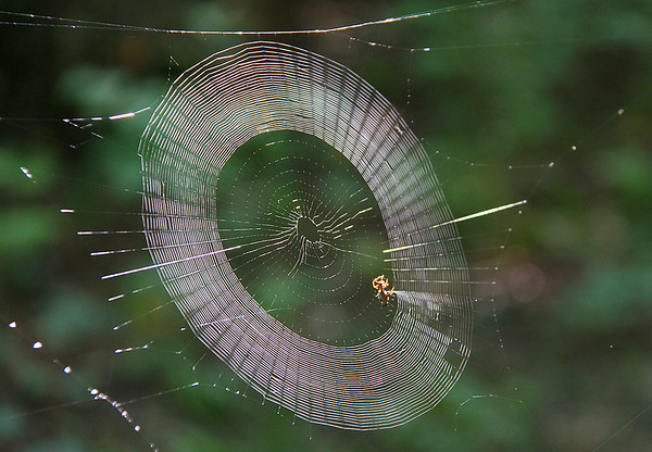 """A close view of a spider web at Mounds Park with a resident """"working.""""<br /> <br /> Photographer's Name: Jerry Byard<br /> Photographer's City and State: Anderson, Ind."""