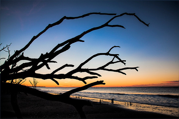 """Botany Beach, also known as """"Bone Beach,"""" near Charleston, South Carolina. The trees near this secluded part of the Atlantic Ocean have lost their foliage due to the waters and winds off the sea.<br /> <br /> Photographer's Name: Barbara Grimball<br /> Photographer's City and State: Anderson, Ind."""