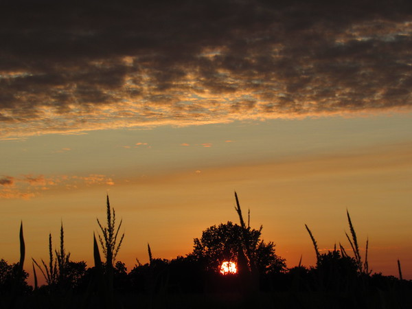An August evening sunset.<br /> <br /> Photographer's Name: Harry Van Noy<br /> Photographer's City and State: Lafayette Township, Ind.