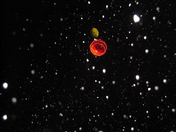 <b>Submitted By:</b> Nancy Schaefer <b>From:</b> Traverse City <b>Description:</b> Cherry Drop, downtown Traverse City, midnight, New Year's Eve