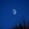 <b>Submitted By:</b> Randal S Hart <b>From:</b> traverse city <b>Description:</b> moon over tree...
