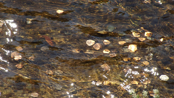 <b>Submitted By:</b> Abbey Hull <b>From:</b> Traverse City <b>Description:</b> Pennies at the bottom of Tahquamenon Falls.