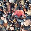 <b>Submitted By:</b> Mike Moravec <b>From:</b> Traverse City <b>Description:</b> Lake Superior stones near Paradise in October, 2005