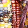 <b>Submitted By:</b> Julie Rapson <b>From:</b> Traverse CIty. <b>Description:</b> Fall Corn.