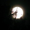 <b>Submitted By:</b> Dan Erickson <b>From:</b> Traverse City <b>Description:</b> The largest full moon we will see in a while.