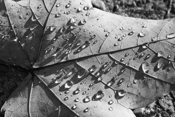 <b>Submitted By:</b> Vanessa R. Chavez <b>From:</b> Cadillac, MI <b>Description:</b> Morning Fall Rain on a Fallen Leaf