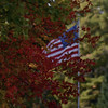 <b>Submitted By:</b> Mark WIdth <b>From:</b> Rapid City <b>Description:</b> Picture taken Saturday AM Oct 10, 2009 on Torch River.  A gentle wind blows the fall colors and reminds us of how lucky we are to live here.