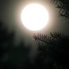 <b>Submitted By:</b> Dan Erickson <b>From:</b> Traverse City <b>Description:</b> A pine branch and full moon.
