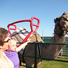 "<span style=""display:none"">Email: geriaval@yahoo.com</span> <b>Submitted By:</b> Geri Valentine <b>From:</b> Cedar <b>Description:</b> Baby Carmella Valentine and her mom, Geri, enjoy the camel at the petting zoo on Special Kids Day. Taken 7/6/11."