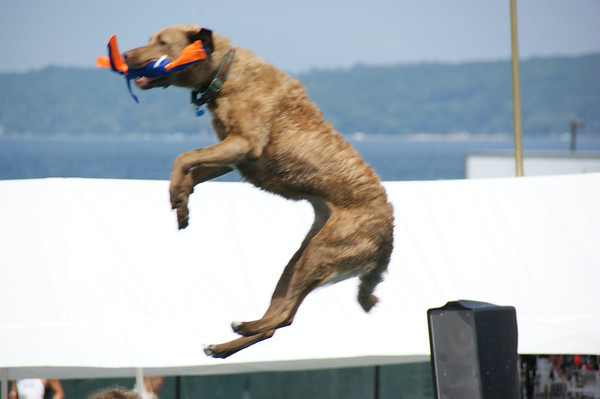 "<span style=""display:none"">Email: webemccrackens@aol.com</span> <b>Submitted By:</b> Dianna McCracken <b>From:</b> Royal Oak <b>Description:</b> Dog catches toy in mid-air, at the Ultimate Air Dog Show."
