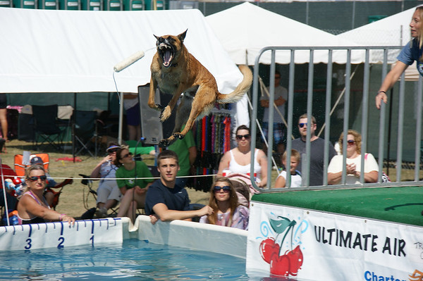 "<span style=""display:none"">Email: webemccrackens@aol.com</span> <b>Submitted By:</b> Dianna McCracken <b>From:</b> Royal Oak <b>Description:</b> This dog has his eyes on the prize after leaving the dock at the Ultimate Air Dog Show. Taken July 8, 2011."