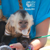 "<span style=""display:none"">Email: smelton40@yahoo.com</span> <b>Submitted By:</b> Susan Melton <b>From:</b> Beulah <b>Description:</b> Despite being a little guy, ""Seymour"" was a BIG hit at the National Cherry Festival petting zoo Wednesday."