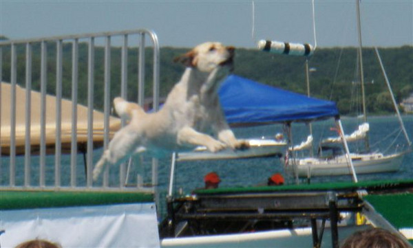 "<span style=""display:none"">Email: donroutzahn@yahoo.com</span> <b>Submitted By:</b> Donald Routzahn <b>From:</b> Traverse City <b>Description:</b> This was taken this afternoon at the Airdog competition."