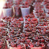 """<span style=""""display:none"""">Email: jmoreno@hagerty.com</span> <b>Submitted By:</b> Jennifer Moreno <b>From:</b> Traverse City <b>Description:</b> Cherries at the entrance of the Cherry Festival."""