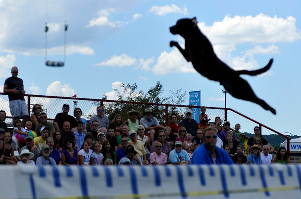 """<span style=""""display:none"""">Email: NatalieWhite2007@u.northwestern.edu</span> <b>Submitted By:</b> Natalie White <b>From:</b> Traverse City <b>Description:</b> Onlookers are wowed during the Ultimate Air Dogs competition Saturday afternoon."""