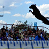 "<span style=""display:none"">Email: NatalieWhite2007@u.northwestern.edu</span> <b>Submitted By:</b> Natalie White <b>From:</b> Traverse City <b>Description:</b> Onlookers are wowed during the Ultimate Air Dogs competition Saturday afternoon."