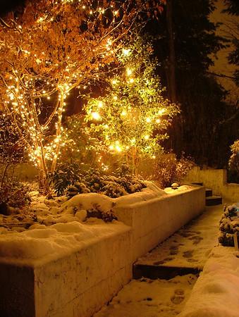 Christmas Lights in my garden 11-30-08<br />  <br /> Diane Budzynowski<br /> Traverse City, Mi