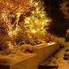 Christmas Lights in my garden 11-30-08<br />  <br /> Diane Budzynowski<br /> Traverse City, Mi