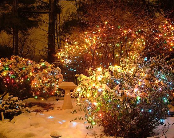 Photo of Christmas Lights taken in my garden on November 30. 2008<br /> <br /> Diane Budzynowski<br /> Traverse City, Mi