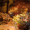 Photo of Christmas Lights taken in my garden on November 30. 2008<br /> <br /> Diane Budzynowski<br /> Traverse City, Mi