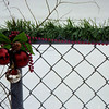 <b>Submitted By:</b> MOLLY CARROLL SHUGART <b>From:</b> TRAVERSE CITY <b>Description:</b> CHRISTMAS ON THE FENCE 2009.