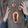 "<b>Submitted By:</b> Dagmar Cunningham <b>From:</b> Traverse City <b>Description:</b> Guernsey Lake, the woodpeckers have been at work ""The Scream"""