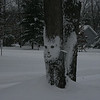Old man winter show his face!<br /> Taken by Al Brown from Roseville, Michigan on a holiday vacation in <br /> Interlochen 12/25/08