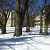 GT Commons, March 8, 2013.  It was such a nice day, even the trees were smiling!<br /> <br /> Photographer's Name: Kevin Empson<br /> Photographer's City and State: Traverse City, MI