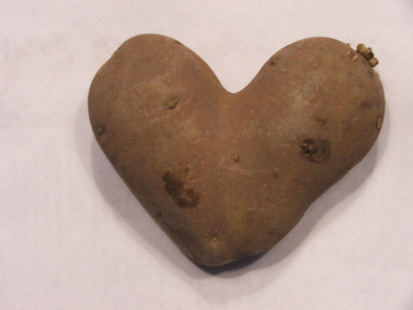 <b>Submitted By:</b> Lori Savage <b>From:</b> Traverse City <b>Description:</b> This potato was in a bag of potatoes that we purchased at Tom's Cherryland last week - Jan 21, 2010.