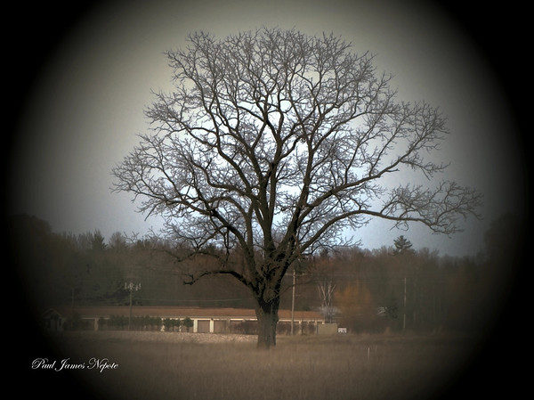 Mitchell Creek Oak<br /> Paul J Nepote <br /> Traverse City, Michigan<br /> Canon PowerShot SX10IS