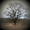 Mitchell Creek Oak<br /> Paul J Nepote <br /> Traverse City, Michigan<br /> Canon PowerShot SX10IS