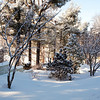 <b>Submitted By:</b> Diane Budzynowski <b>From:</b> Traverse City <b>Description:</b> Winter Garden, 1/23/11