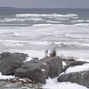 <b>Submitted By:</b> JoAnn Wilkinson <b>From:</b> Onaway, Michigan <b>Description:</b> Lake Huron shore, December 30,2009 Cheboygan, Michigan