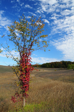 <b>Submitted By:</b> Rick Max <b>From:</b> Northport, Michigan <b>Description:</b> A Lone Fall Tree in a Suttons Bay Field 10-2-11