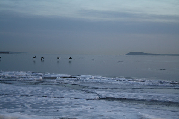 <b>Submitted By:</b> Robert DeGabriele <b>From:</b> Traverse City <b>Description:</b> Geese taking flight just off Clinch Park beach at dawn, March 15