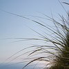 Dune grass in Seeping Bear Dunes in Empire<br /> By: Floyd Mitz<br /> Traverse City