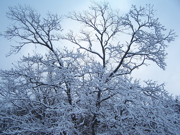 <b>Submitted By:</b> Lori Malmstrom <b>From:</b> Honor <b>Description:</b> Winter in Sleeping Bear National Forest.