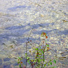 Spawning salmon in the Betsie River...Wallin Rd...<br /> <br /> Susie Morrow, Thompsonville