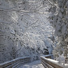 The trees along the Boardman Lake Trail were heavy with snow on March 9th, <br /> 2009<br /> <br /> Margaret Pierson