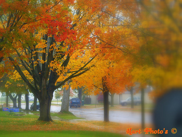<b>Submitted By:</b> Randal  Hart <b>From:</b> traverse city <b>Description:</b> fall,out my front window